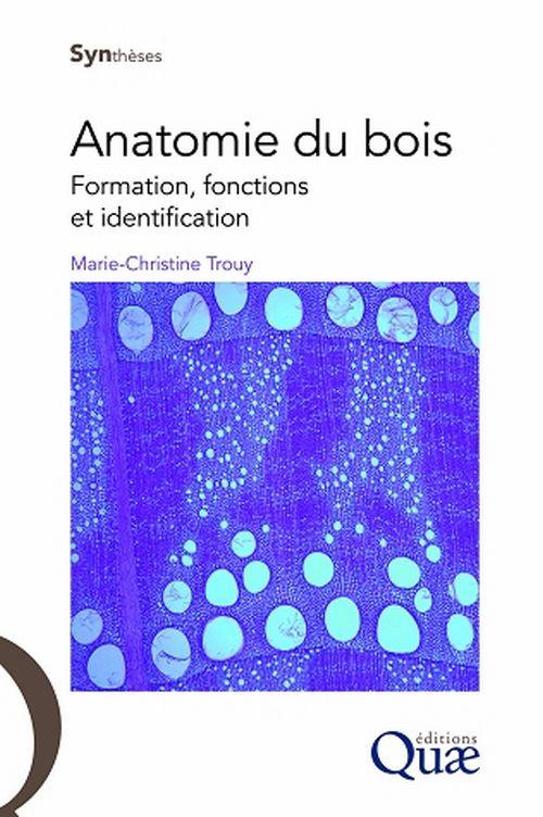 illustration Anatomie du bois – Formation, fonctions et identification